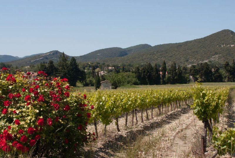 Les Vignerons de Valléon – Caveau de St Gervais sur Roubion à Saint-Gervais-sur-Roubion - 0