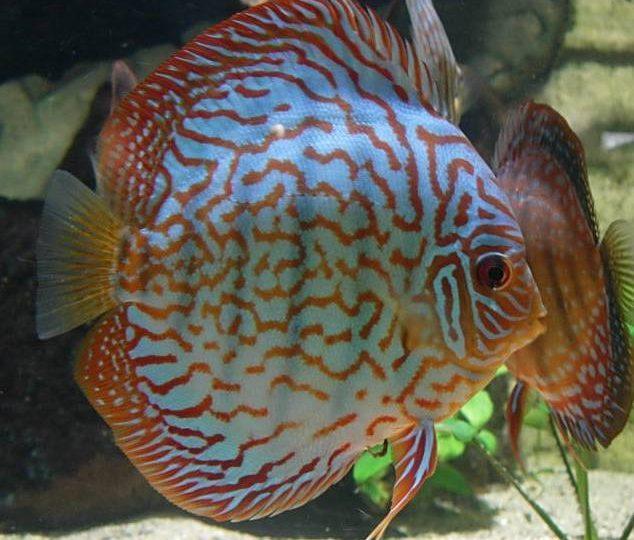 Aquarium des Tropiques à Allex - 9