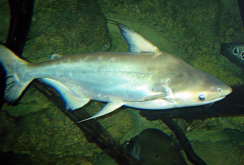 Aquarium des Tropiques à Allex - 10